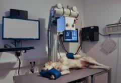 Röntgenuntersuchung